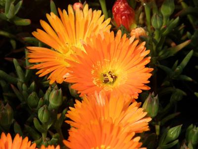 foto-fiori--Bisca-flor---P4070680
